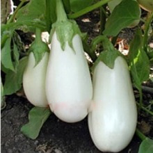 200pcs Organic White Eggplant Seeds