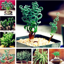 200 Pcs Grass Plant Succulents Diy Bonsai Potted Garden Home Exotic Ornamental